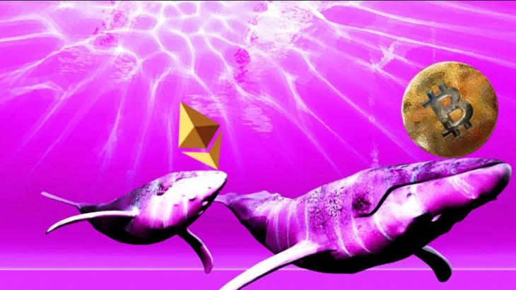 Santiment : آمادگی نهنگ ها برای جمع آوری بیتکوین و اتریوم