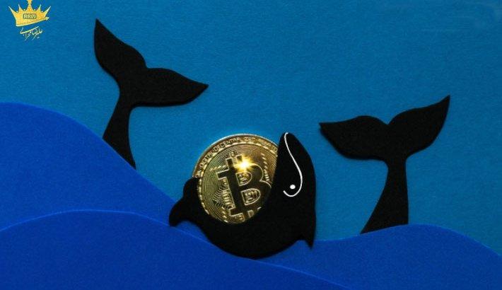 نگهداری بیتکوین توسط برخی از نهنگ های بازار